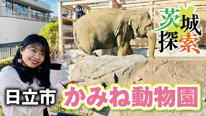 日立市「かみね動物園」page-visual 日立市「かみね動物園」ビジュアル