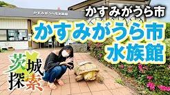 かすみがうら市「かすみがうら市水族館」page-visual かすみがうら市「かすみがうら市水族館」ビジュアル