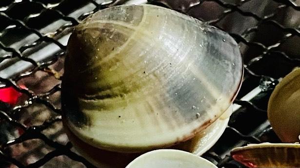 ハマグリと牡蠣でBBQ✨page-visual ハマグリと牡蠣でBBQ✨ビジュアル
