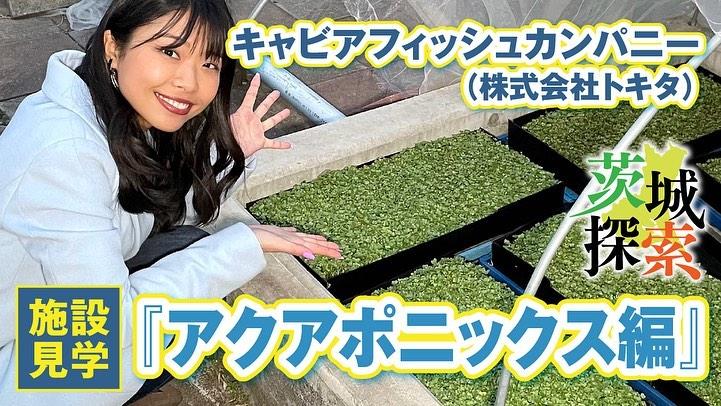 株式会社トキタさん『アクアポニックス野菜』page-visual 株式会社トキタさん『アクアポニックス野菜』ビジュアル