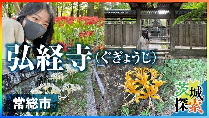 秋の楽しみ「彼岸花」page-visual 秋の楽しみ「彼岸花」ビジュアル
